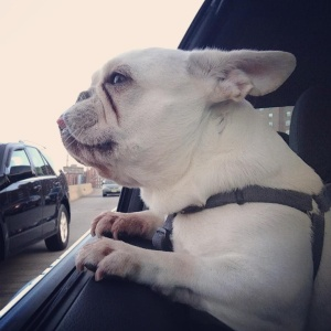 http://dailyfrenchie.tumblr.com/page/4